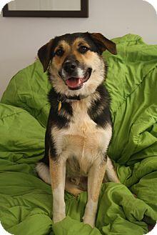 Shepherd (Unknown Type)/Labrador Retriever Mix Dog for adoption in Marietta, Georgia - Emmett