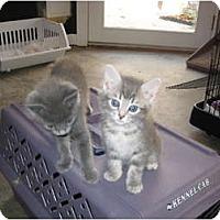 Adopt A Pet :: Poppy - Jeffersonville, IN