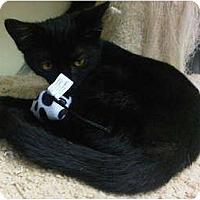 Adopt A Pet :: Nicoal - Lake Charles, LA