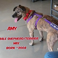 Adopt A Pet :: Amy - Huddleston, VA