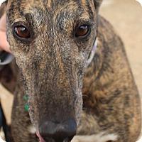 Adopt A Pet :: Leisel - Tucson, AZ