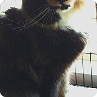 Adopt A Pet :: Sylvia - Randolph, NJ