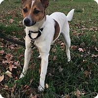 Adopt A Pet :: Kasey - Westminster, MD