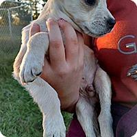 Adopt A Pet :: Luna's Lovey - Chantilly, VA