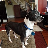 Adopt A Pet :: Bodhi Camo in New England - Providence, RI