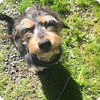 Adopt A Pet :: Hershey - Seattle, WA