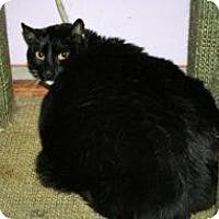Adopt A Pet :: Francois - Marietta, GA
