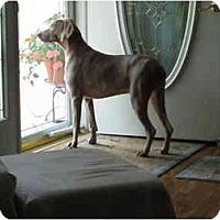 Adopt A Pet :: Shelby - Attica, NY