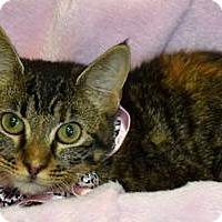Adopt A Pet :: Braylen - Colorado Springs, CO