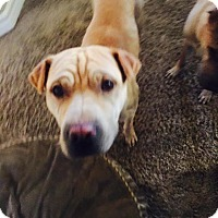 Adopt A Pet :: Bo/Ernie in NM - Mira Loma, CA