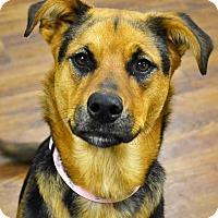 Adopt A Pet :: Aspen - Lake Odessa, MI