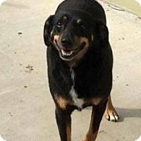 Adopt A Pet :: Cyprus - Richmond, VA