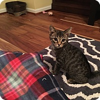 Adopt A Pet :: Riley - Chesterfield Township, MI