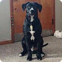 Adopt A Pet :: Heinz (Handsome) - Chambersburg, PA