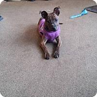 Adopt A Pet :: Jenny - East Randolph, VT