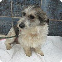 Terrier (Unknown Type, Medium) Mix Puppy for adoption in Bartonsville, Pennsylvania - Sadie