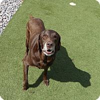 Adopt A Pet :: Ashton - Yorktown, VA