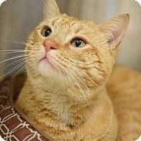 Adopt A Pet :: Fritz - Aiken, SC