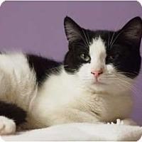 Adopt A Pet :: Margo - Ocean City, NJ