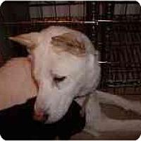 Adopt A Pet :: HuiDa - Marysville, CA