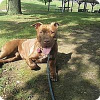 Adopt A Pet :: Flynn - Dallas, PA