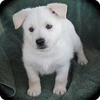 Adopt A Pet :: Baloo - La Habra Heights, CA