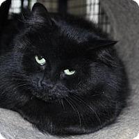 Adopt A Pet :: Donna - Hamilton, ON