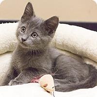 Adopt A Pet :: Julie Newmar - Chicago, IL
