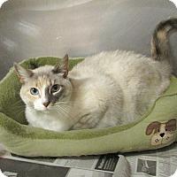 Adopt A Pet :: Ruby - Washingtonville, NY