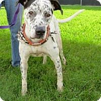 Adopt A Pet :: Spot - Tampa, FL