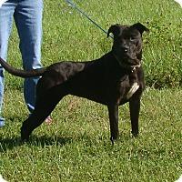 Adopt A Pet :: tara - Cameron, MO