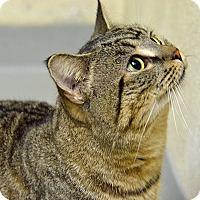 Adopt A Pet :: 10308985 - Brooksville, FL