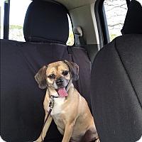 Adopt A Pet :: Lola - Waipahu, HI