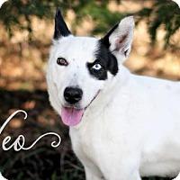 Adopt A Pet :: Neo - Joliet, IL
