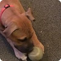 Adopt A Pet :: Courtesy Post. Annie - Upper Sandusky, OH