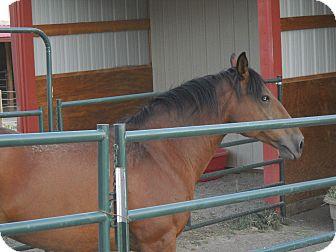 Mustang for adoption in Larskpur, Colorado - Sadie