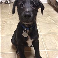 Adopt A Pet :: Zeus - Marietta, GA