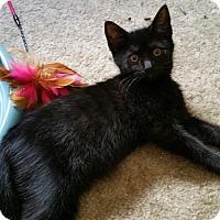 Adopt A Pet :: Lilac - Philadelphia, PA