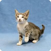 Adopt A Pet :: Audi - Lake Jackson, TX