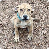 Adopt A Pet :: Elly - gorgeous girl!! - Stamford, CT