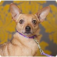 Adopt A Pet :: Caroline - Fort Wayne, IN