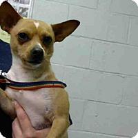 Adopt A Pet :: MICKEY - Atlanta, GA