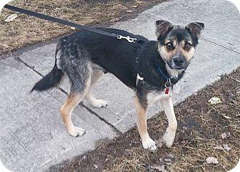 German Shepherd Dog Mix Dog for adoption in Winnipeg, Manitoba - KEEVA