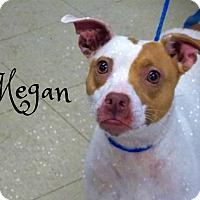 Adopt A Pet :: Megan - Defiance, OH