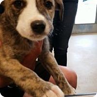 Adopt A Pet :: Seadra 6291 - Joplin, MO