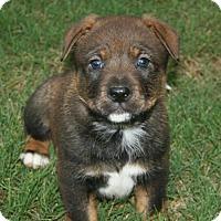 Adopt A Pet :: Rudder - Holly Springs, NC