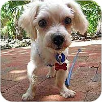 Adopt A Pet :: Wally - Ft Myers, FL