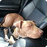 Adopt A Pet :: Kip - levittown, PA