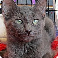 Adopt A Pet :: Marmee - Seminole, FL