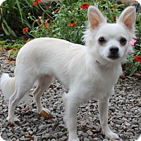 Adopt A Pet :: Lily - Byrdstown, TN